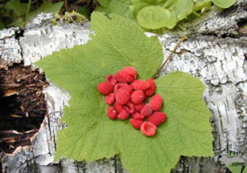 Thimbleberries on a leaf.